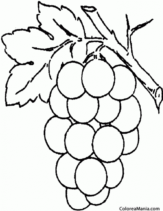 Colorear Uvas Redondas Frutas Dibujo Para Colorear Gratis