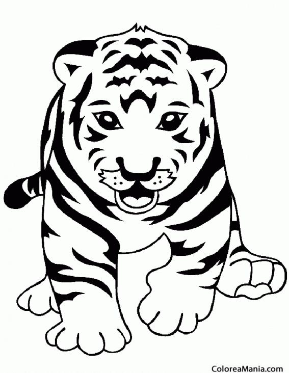Colorear Tigre De Frente Animales De La Selva Dibujo Para