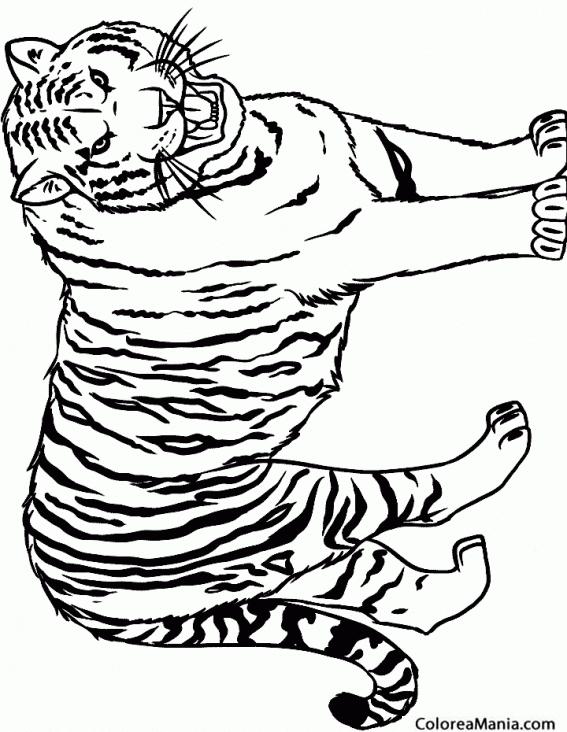 Colorear Tigre rugiendo 2 (Animales de la Selva), dibujo ...