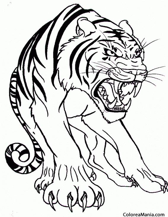Colorear Tigre Atacando Animales De La Selva Dibujo Para