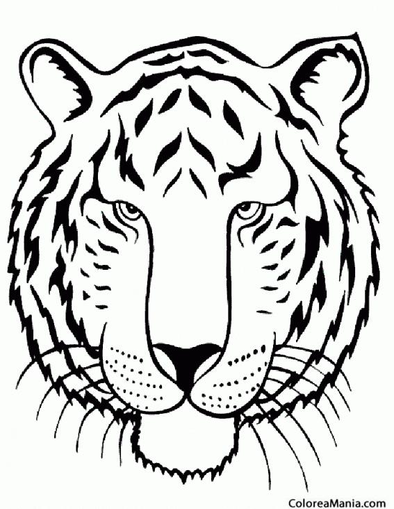 Colorear Tigre Detalles Cabeza Animales De La Selva