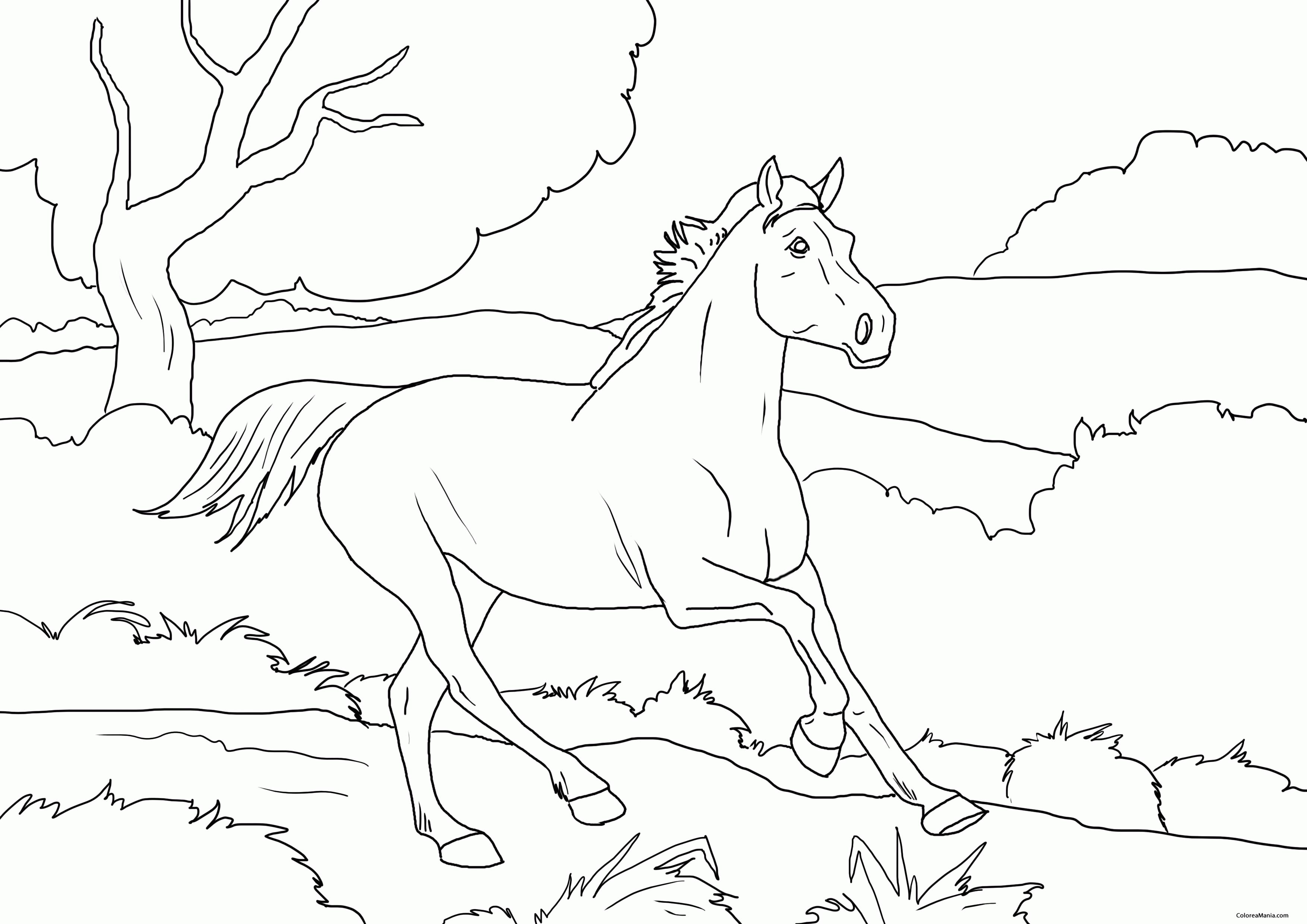 Colorear Caballo Corriendo En La Montaña Animales De Granja