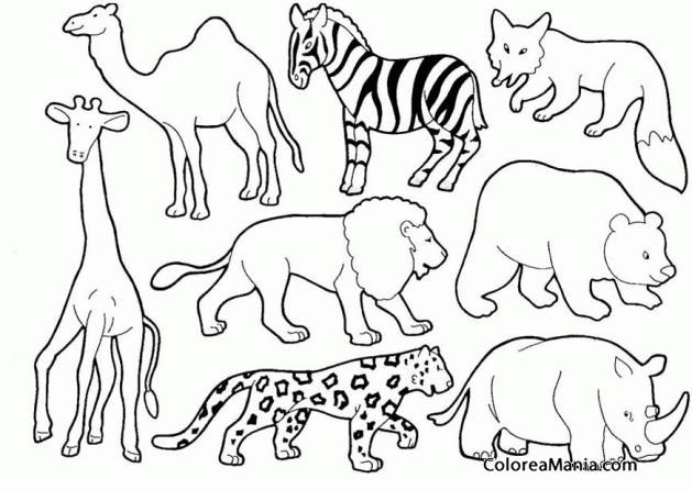 Colorear Animales Salvajes 2 Animales De La Selva Dibujo Para