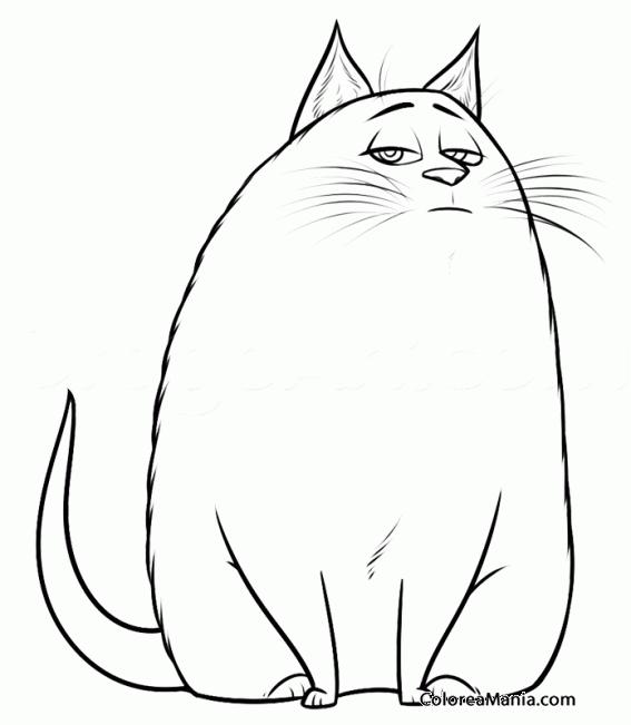 Colorear Chloe Mascotas 2016 Dibujo Para Colorear Gratis