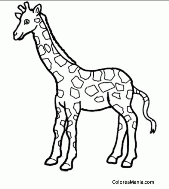 Colorear Soy Una Jirafa Animales Del Bosque Dibujo Para