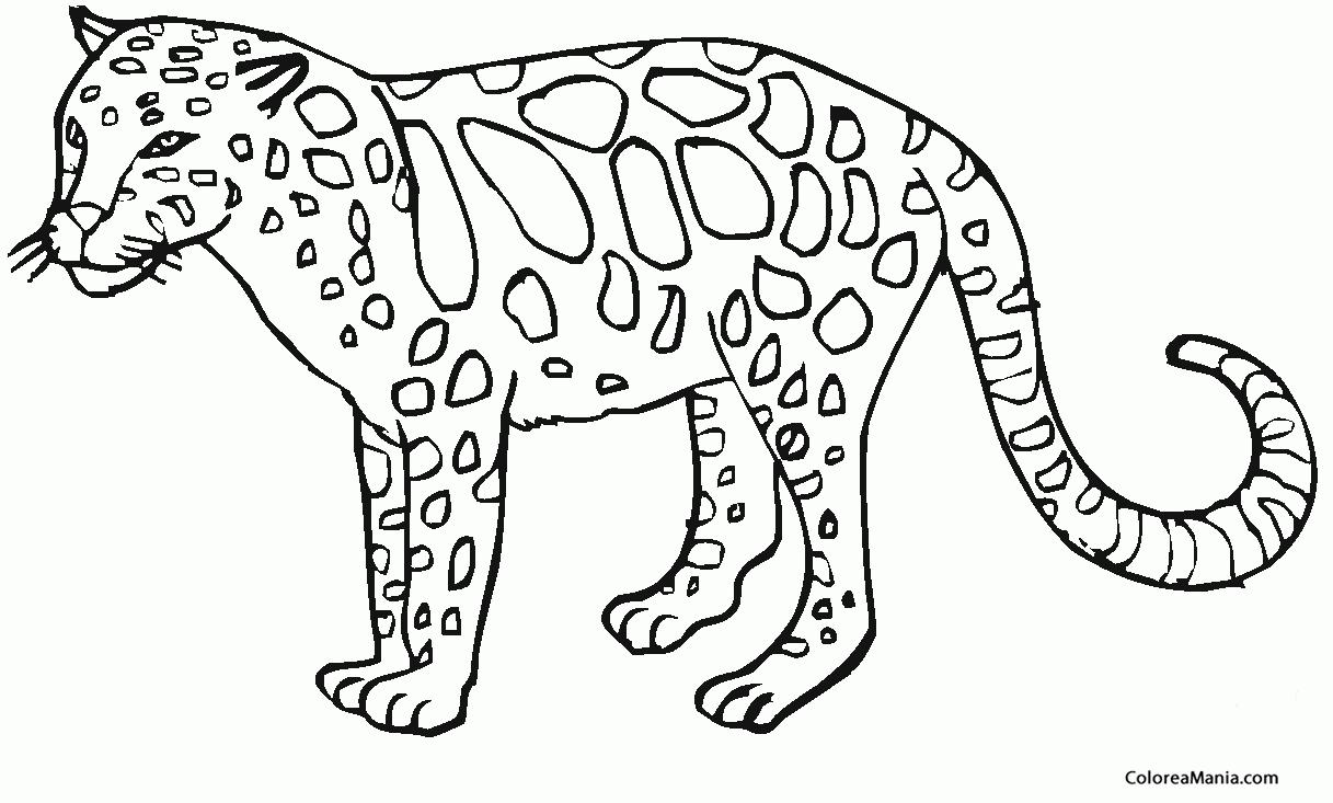 Dibujo Leopardo Para Colorear E Imprimir