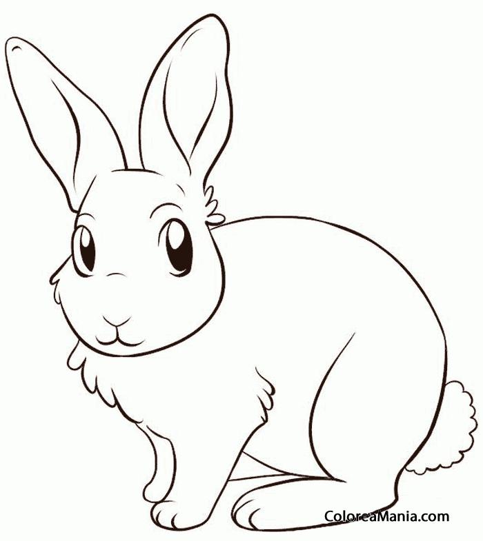 Colorear Conejo sentado (Animales de Granja), dibujo para colorear ...