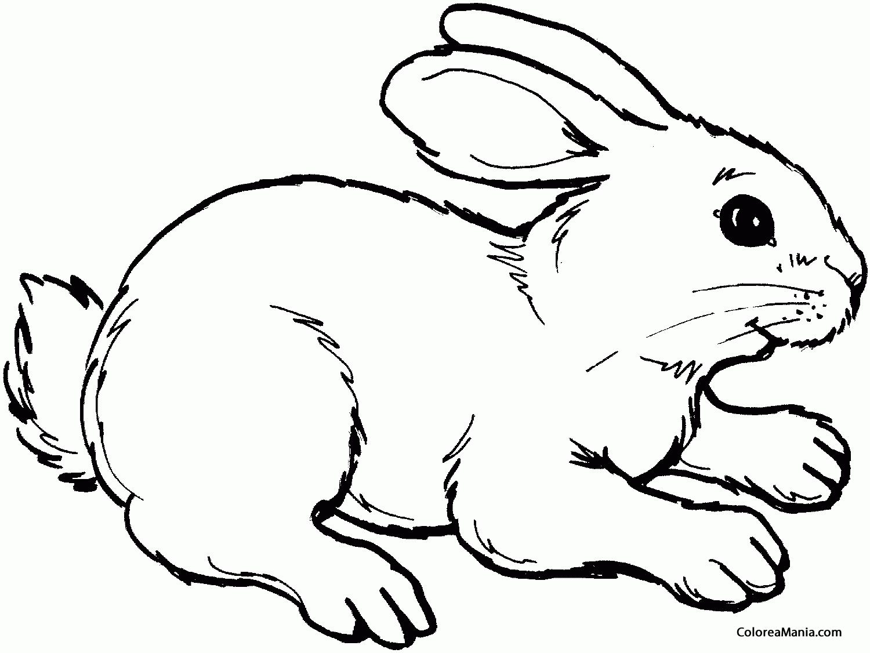 Colorear Conejo contento (Animales de Granja), dibujo para colorear ...