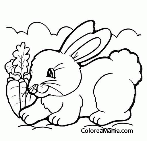 Colorear Conejo Con Zanahoria Animales De Granja Dibujo
