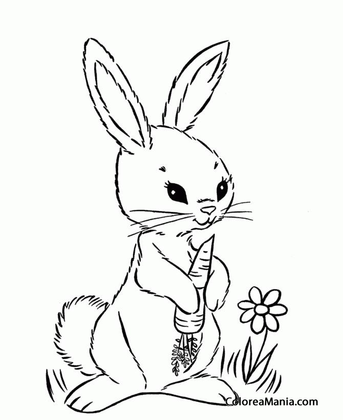 Colorear Conejo comiendo zanahoria Animales de Granja dibujo
