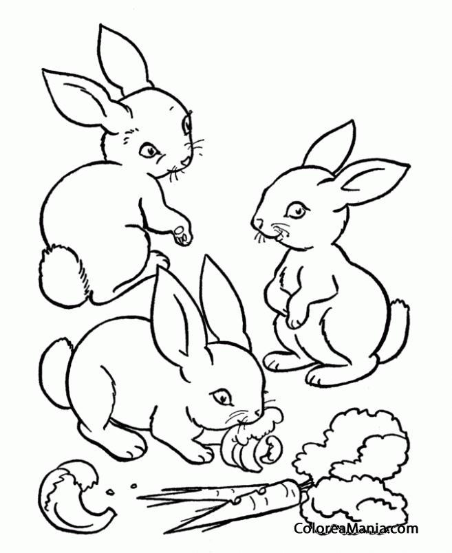 Colorear Conejos Comiendo Zanahorias Animales De Granja