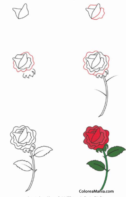Colorear como dibujar una rosa cmo dibujar flores y - Como secar una rosa ...
