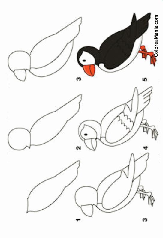 Colorear Como dibujar un frailecillo (Cómo dibujar animales), dibujo ...
