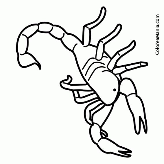 Colorear Alacran Insectos Dibujo Para Colorear Gratis