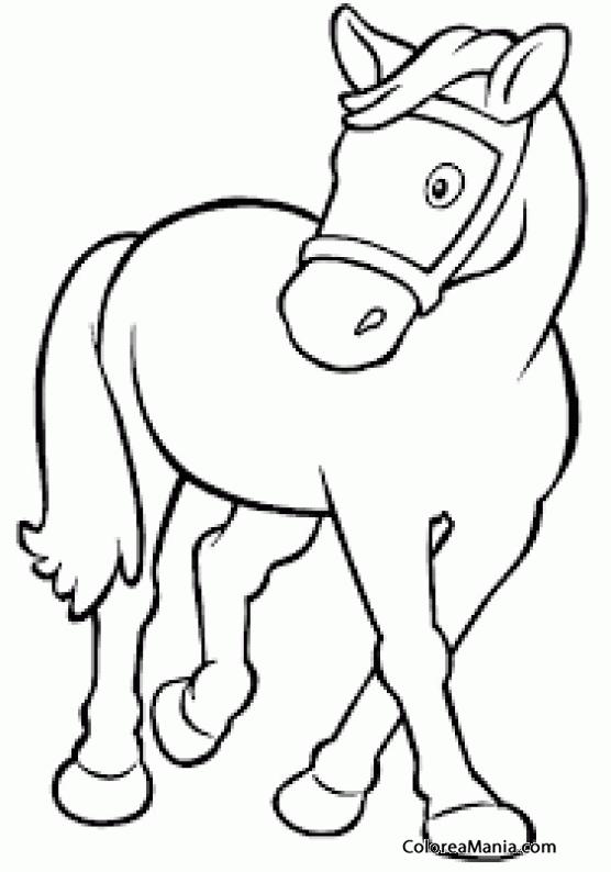 Colorear Caballos Ponis 5 Animales Domésticos Dibujo