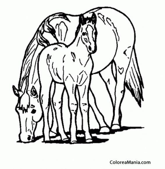 Colorear Caballos Ponis 14 Animales Domésticos Dibujo