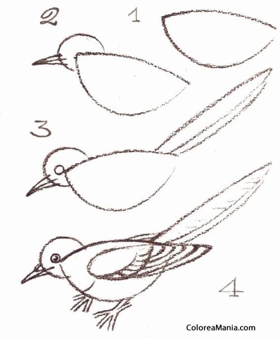 Colorear Un gorrión (Cómo dibujar Aves), dibujo para colorear gratis