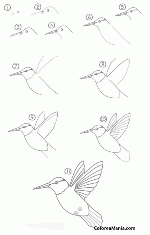 Colorear Colibri, en 10 pasos (Cómo dibujar Aves), dibujo para ...