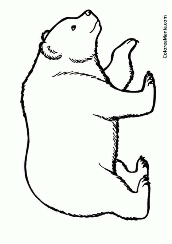 Colorear Oso Polar 3 Animales Polares Dibujo Para Colorear Gratis