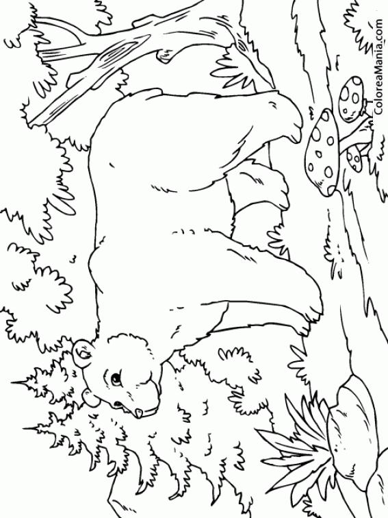 Colorear Oso En El Bosque Animales Del Bosque Dibujo Para