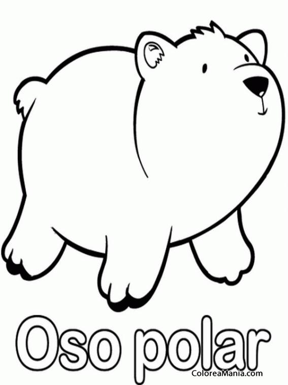 Colorear Oso Polar 10 Animales Polares Dibujo Para Colorear Gratis