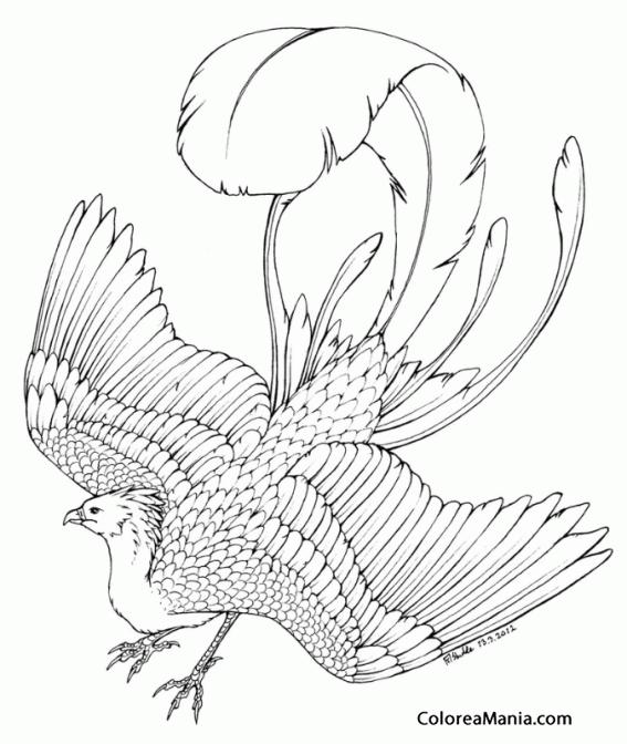 Colorear Ave Fénix 6 (Animales Fantásticos), dibujo para colorear gratis