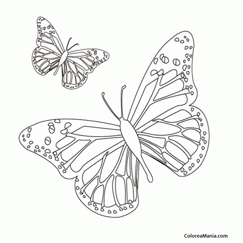 Colorear Mariposas (Insectos), dibujo para colorear gratis