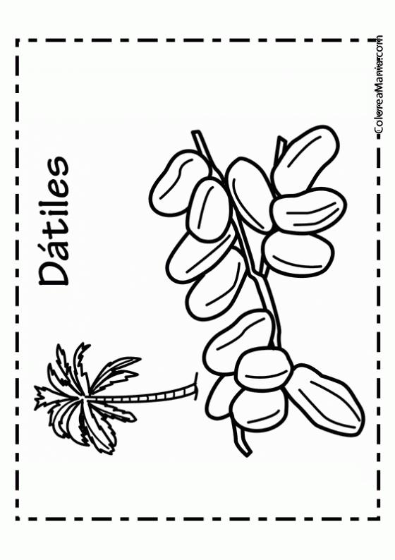 Palmera Y Sol Dibujos Para Colorear