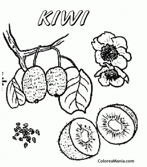 Colorear Kiwi, en rama árbol (Frutas), dibujo para colorear gratis