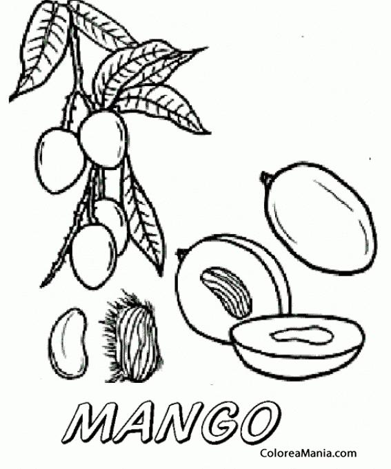 Colorear Mangos En Una Rama Frutas Dibujo Para Colorear Gratis