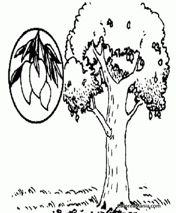 Colorear Árbol con mangos (Frutas), dibujo para colorear gratis