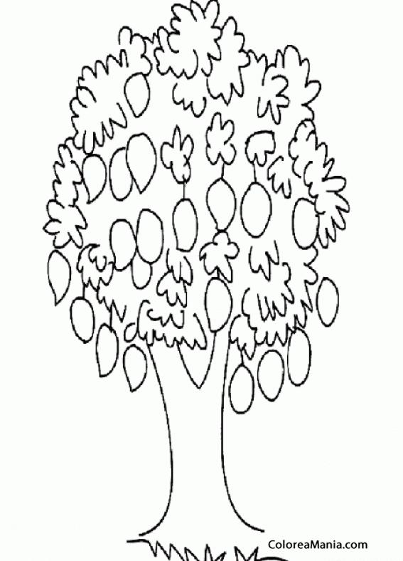 Colorear árbol De Mangos Frutas Dibujo Para Colorear Gratis