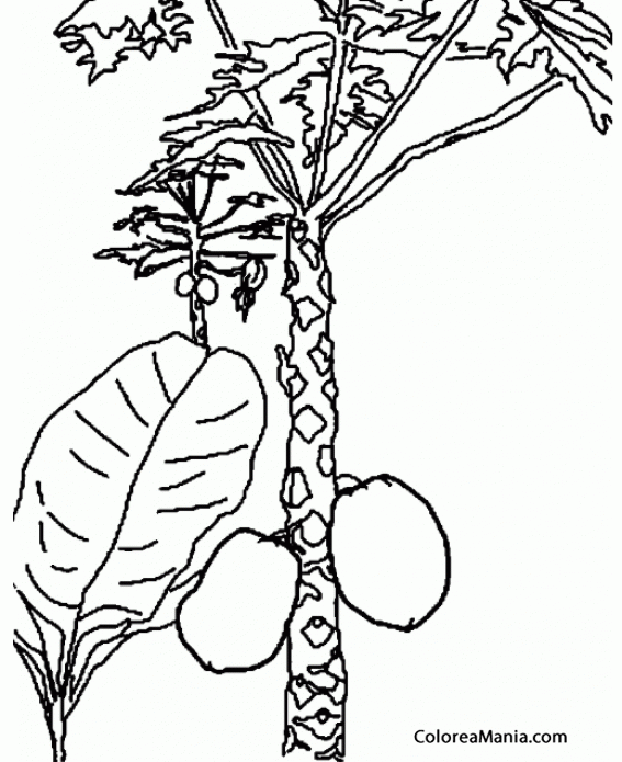 Colorear Árbol de papayas (Frutas), dibujo para colorear gratis