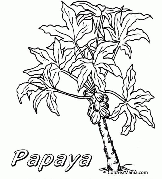 Colorear Árbol de la papaya (Frutas), dibujo para colorear gratis