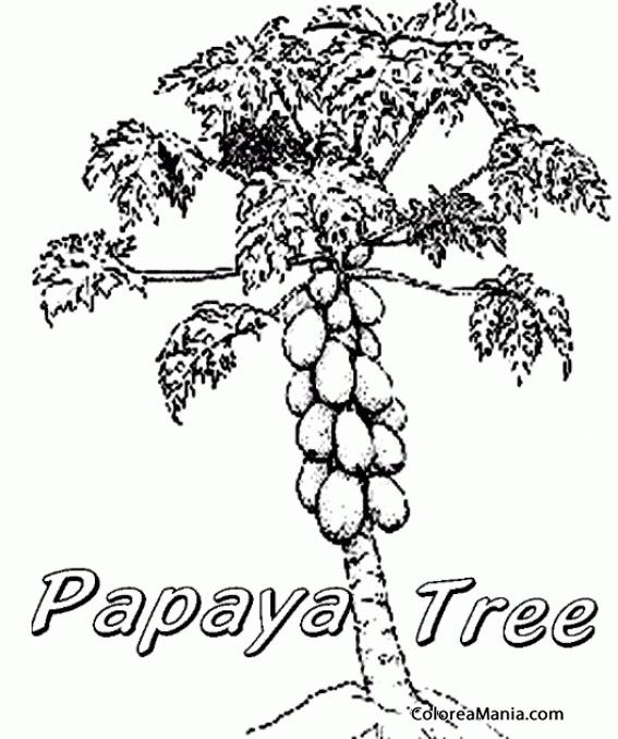 Colorear Árbol con racimo de papayas (Frutas), dibujo para colorear ...