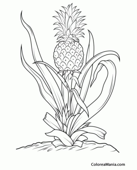 Colorear Pia tropical en su planta Frutas dibujo para colorear