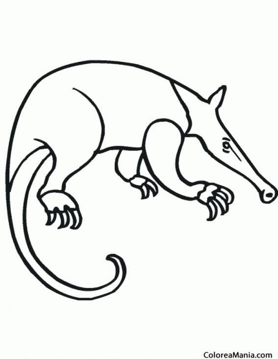 Colorear Oso Hormiguero 2 Animales Del Bosque Dibujo Para
