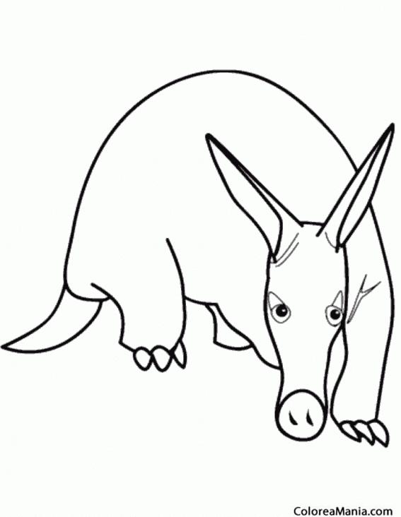 Colorear Cerdo Hormiguero (Animales del Bosque), dibujo para ...