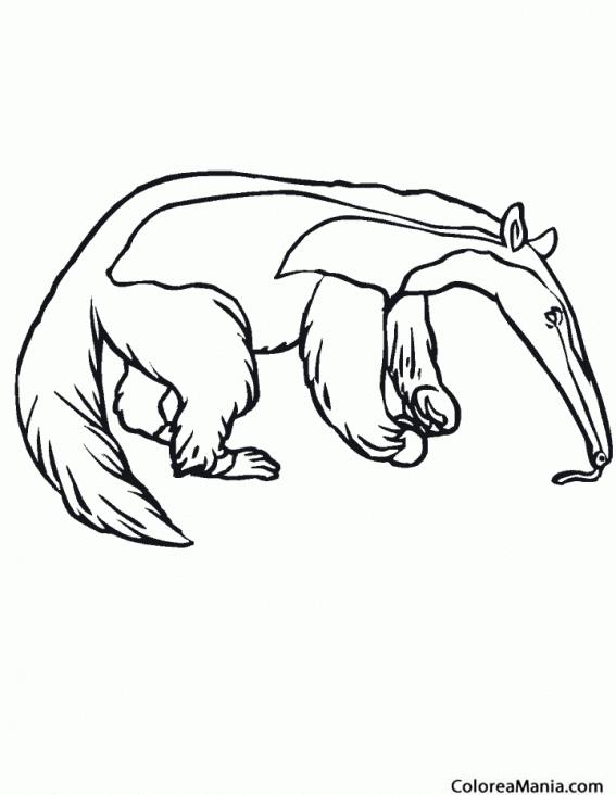 Colorear Oso Hormiguero 6 (Animales del Bosque), dibujo para ...