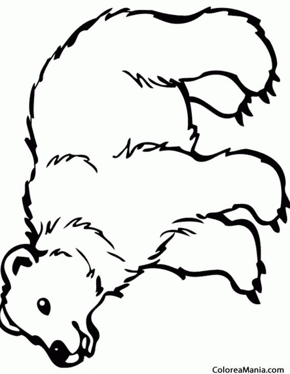 Colorear Oso Polar 12 (Animales de la Selva), dibujo para colorear ...