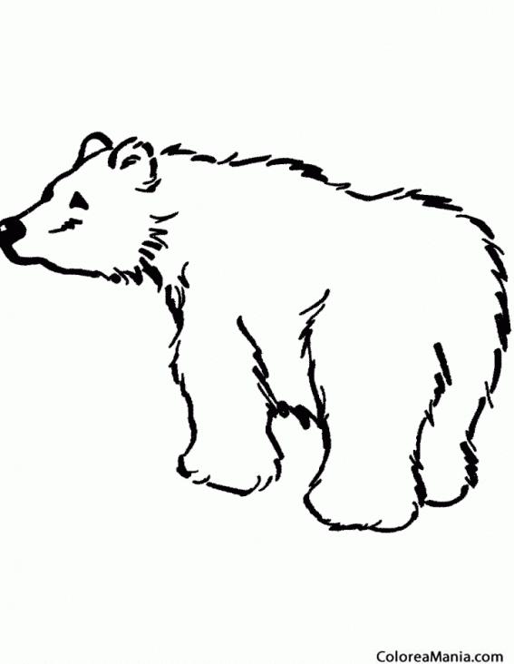 Colorear Oso Grizzli 2 Animales De La Selva Dibujo Para Colorear