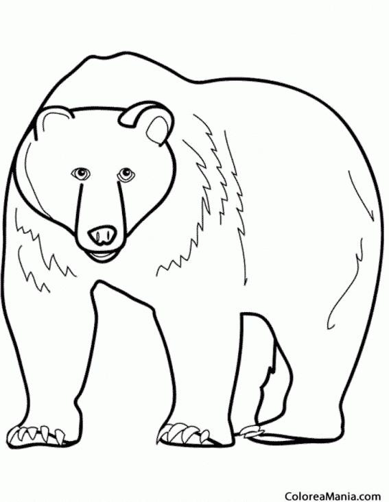 Colorear Oso 2 Animales De La Selva Dibujo Para Colorear Gratis