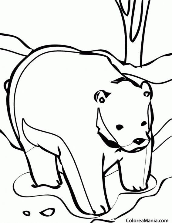 Vistoso Página Para Colorear De Oso Pardo Elaboración - Dibujos de ...