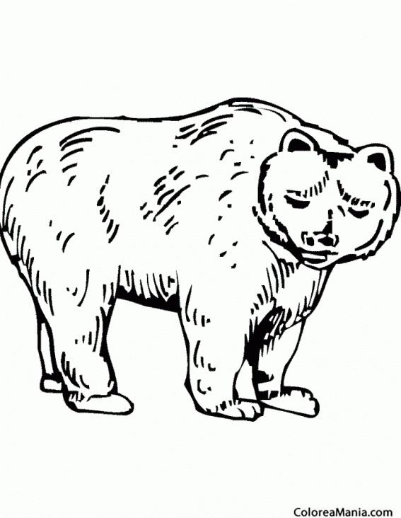 Colorear Oso Pardo 2 Animales De La Selva Dibujo Para Colorear Gratis