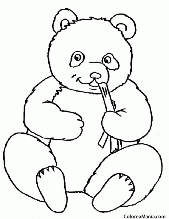 Colorear Oso Panda comiendo caa Animales de la Selva dibujo