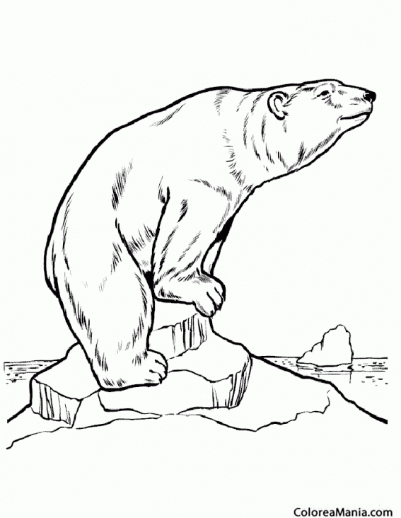 Colorear Oso polar de pie 2 (Animales de la Selva), dibujo para ...