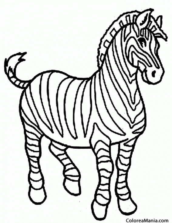 Dibujos Para Colorear Cebra