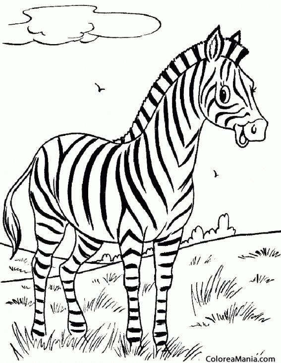 Colorear Cebra Pastando 2 Animales De La Selva Dibujo Para