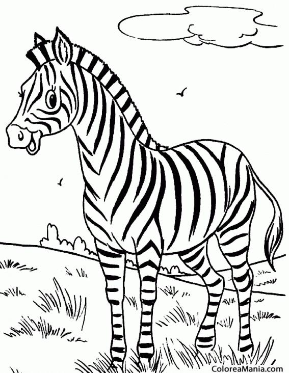 Colorear Cebra En El Prado Animales De La Selva Dibujo Para