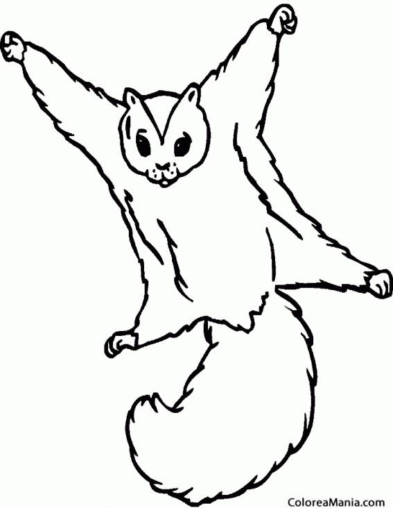Colorear Ardilla voladora (Animales del Bosque), dibujo para ...